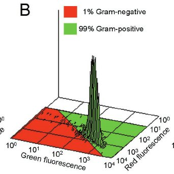 Is Gram Staining the Same As Gram Negative?